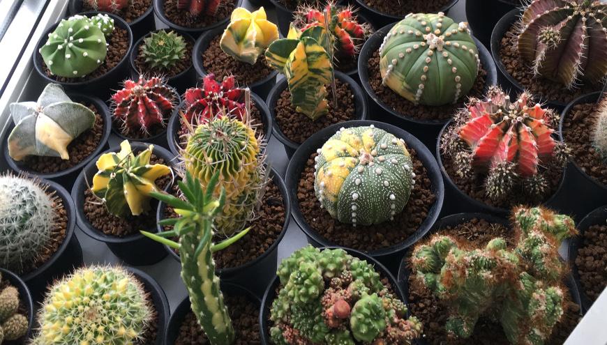 Подготовка комнатных растений к зиме