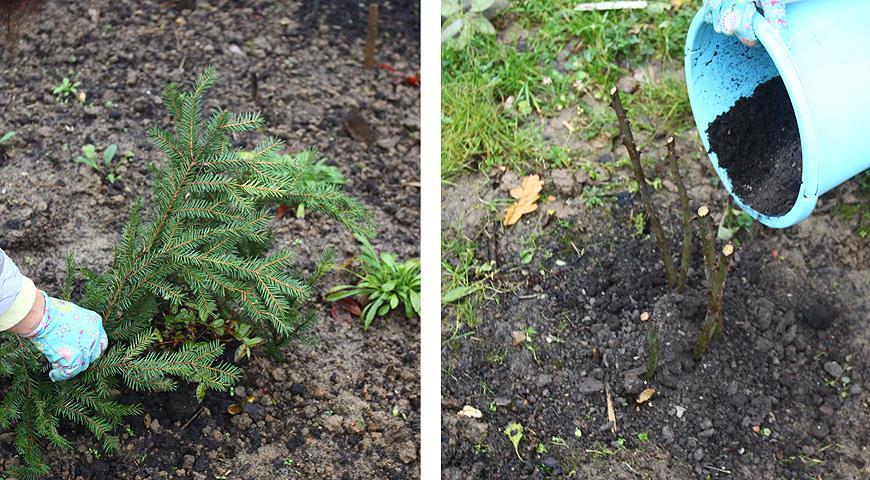 Чем укрыть теплолюбивые растения на зиму?