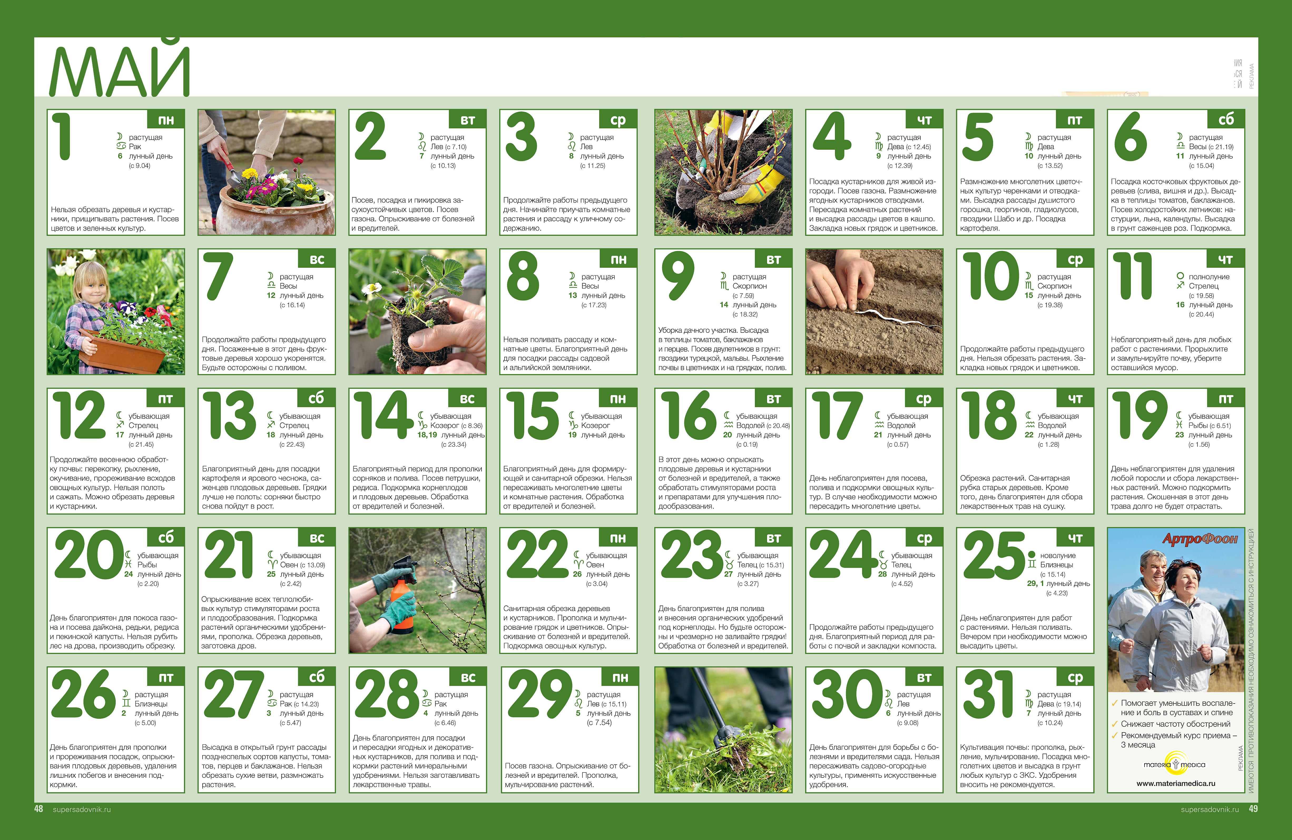 лунный календарь ухода за комнатными растениями в июне 2017