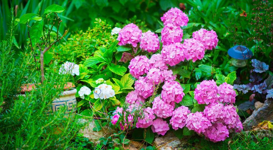 Календарь цветения кустарников