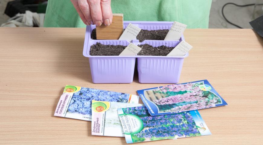 Выращивание многолетников из семян. Победы и неудачи сезона. Фотоотчет