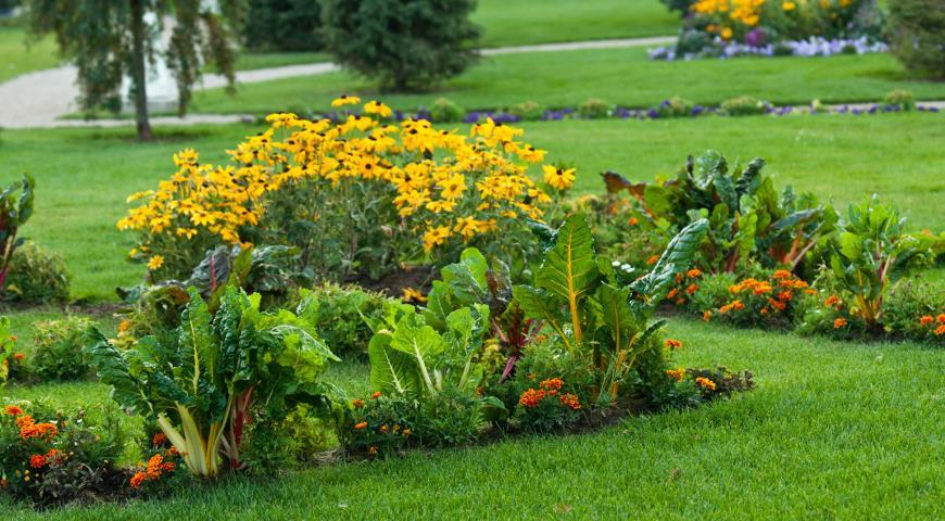 Какие цветы нельзя сажать в огороде