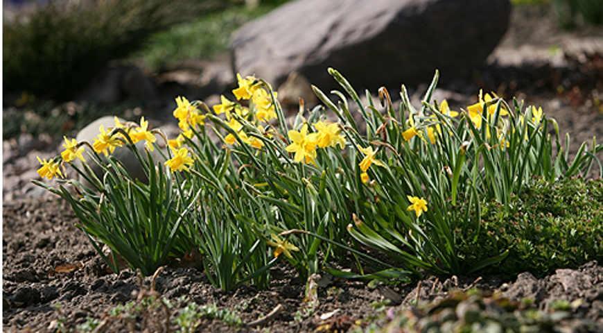Вьющиеся однолетние цветы для дачи фото