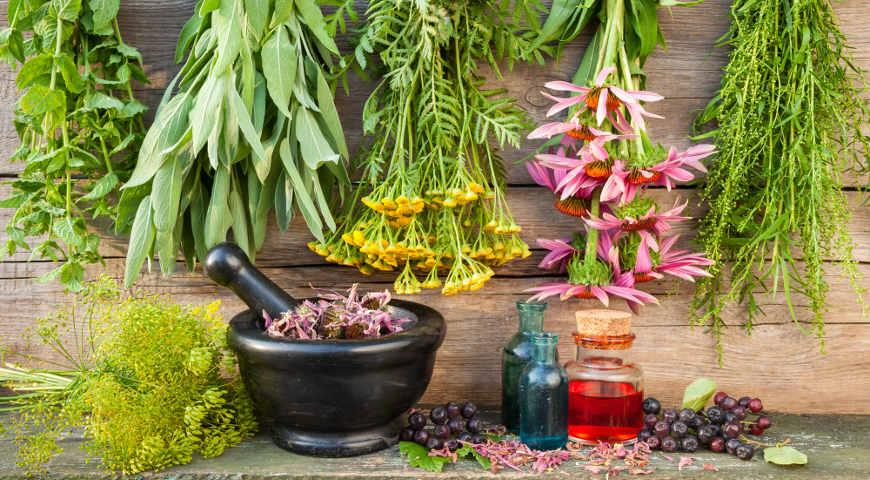 Medicinal Herbs And Plants – Herboponics - Hydroponics For Everyone