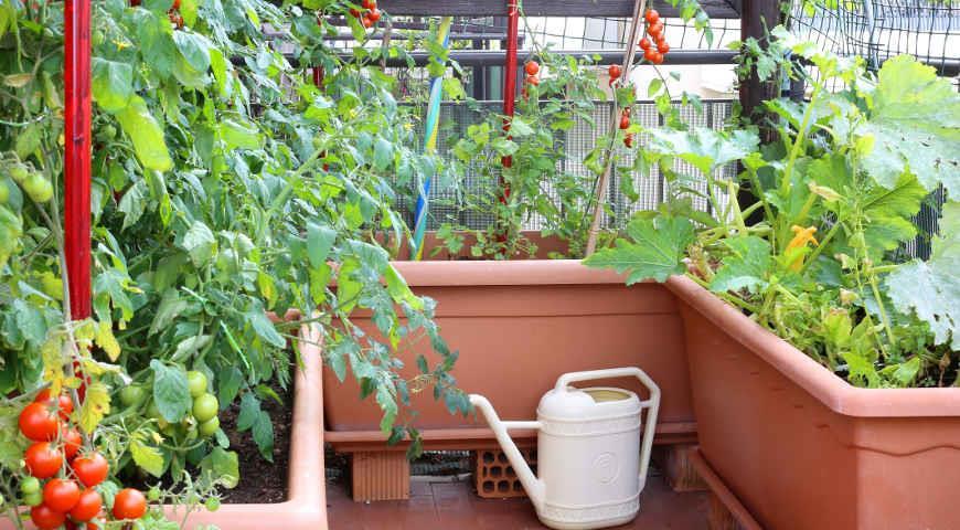 Сад, огород, участок и дом - как обустроить.