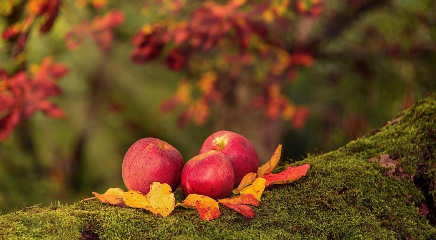 плодовые деревья подготовка к зиме
