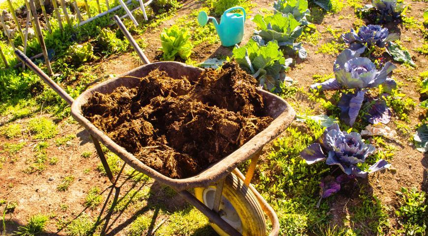 НАВОЗ - самое популярное органическое удобрение: все об использовании в саду и в огороде