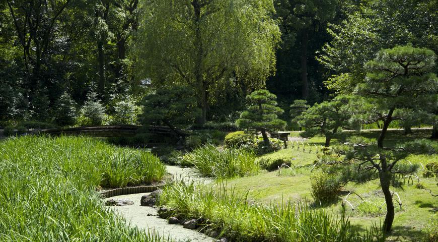 дизайн сада, ландшафтный дизайн, водоем, пруд