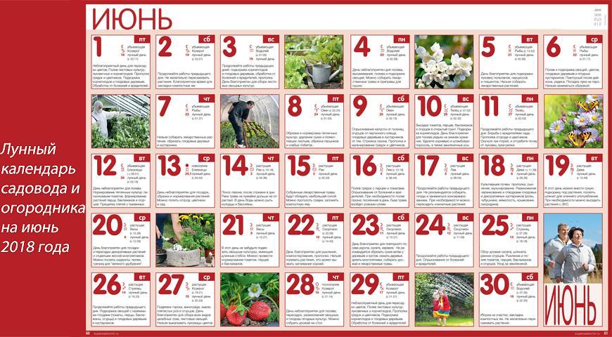 Лунный посевной календарь садовода-огородника на июнь 2018 года