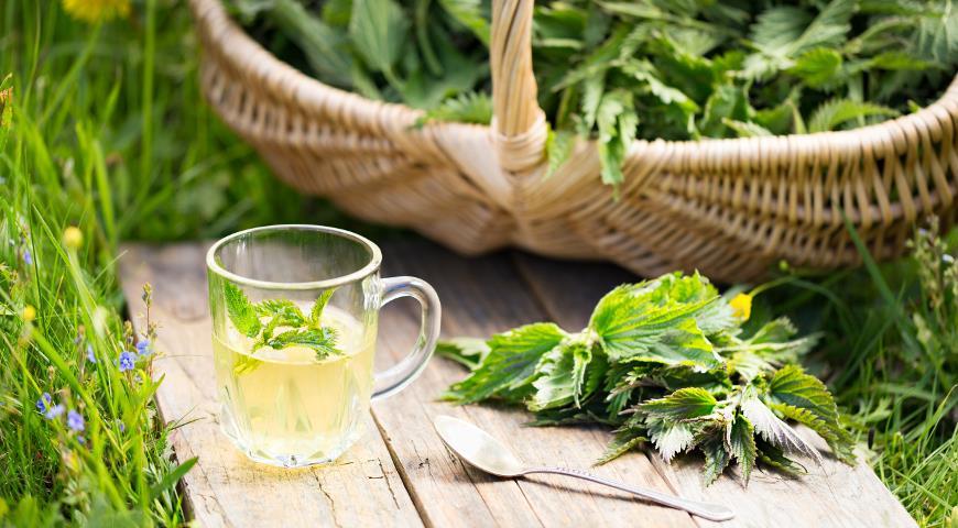 Чай из собранной свежей крапивы; сбор крапивы в корзинку