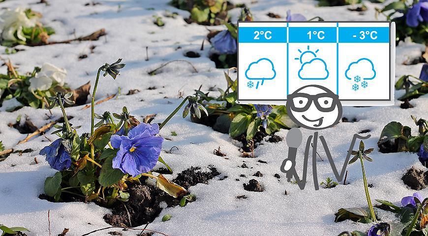 Ожидаемых заморозков принять меры предосторожности и провести
