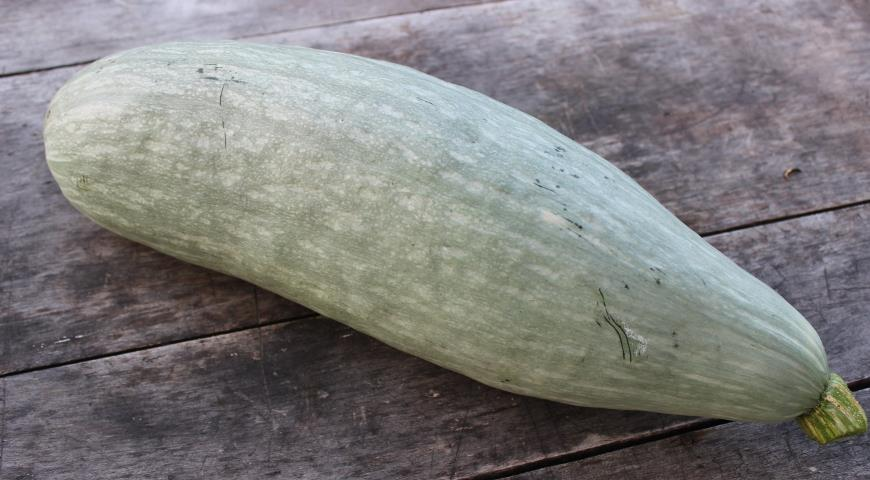 Сквоши: что это за овощи?