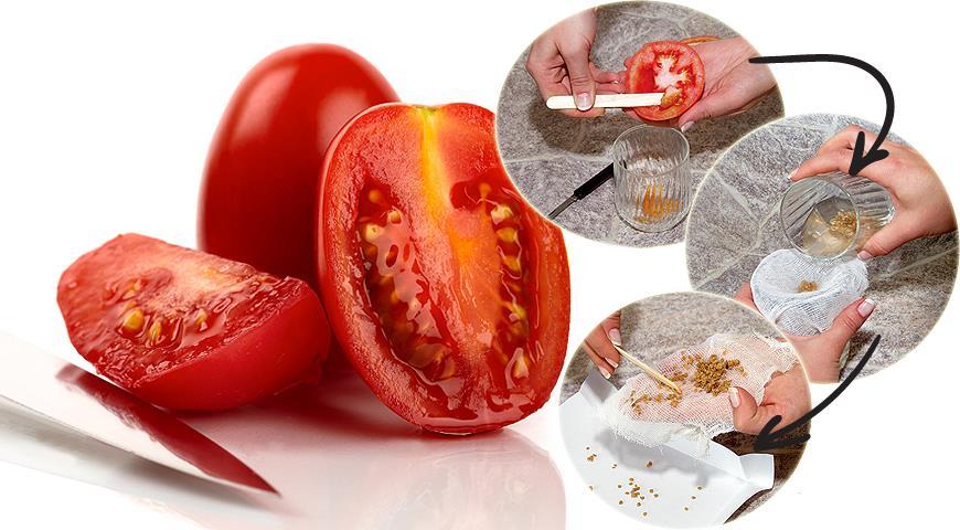 Картинки по запросу семена томатов