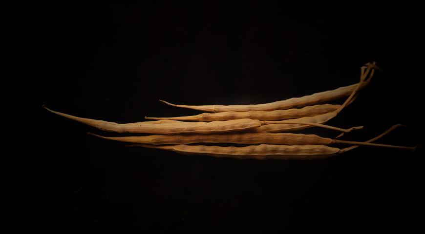 Как собрать свои семена помидоров, огурцов, моркови, гороха, пряных трав и других овощных культур?