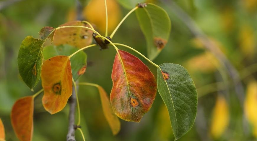 Когда и чем обрабатывать деревья осенью по Лунному календарю 2021 года