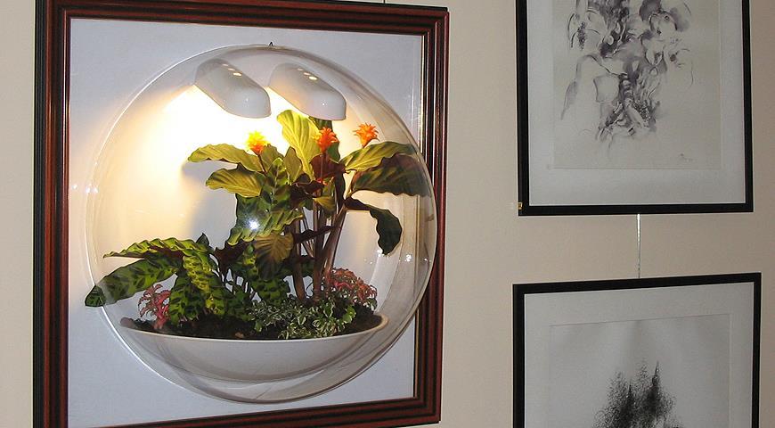Кактусы в стеклянных сосудах