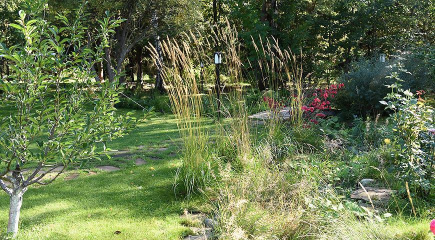 Самые красивые сады России: У леса на опушке