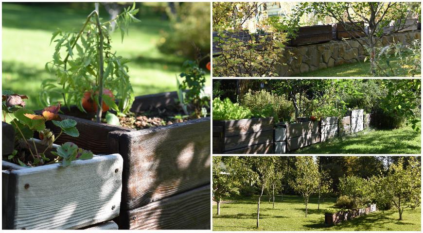 сад Юровой, дизайн сада, контейнерный огород