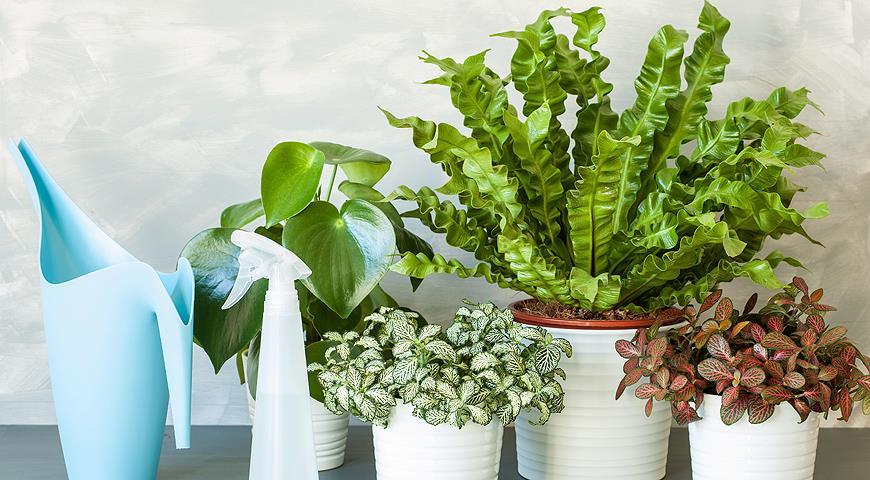 5 комнатных растений с плохой энергетикой