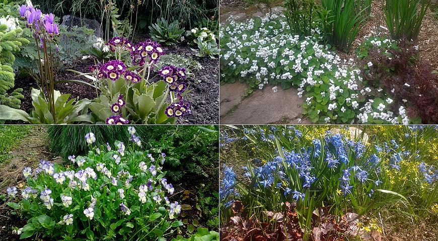 Gardens of Russia: Melody garden