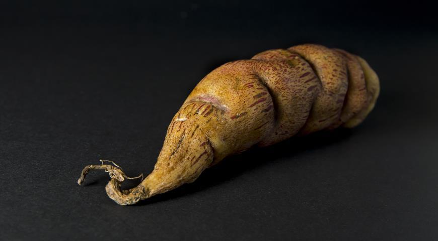Кислица клубненосная — необычный овощ индейцев: как вырастить диковинный клубни в средней полосе?