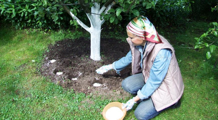 Секреты введения осенней подкормки под плодовые деревья