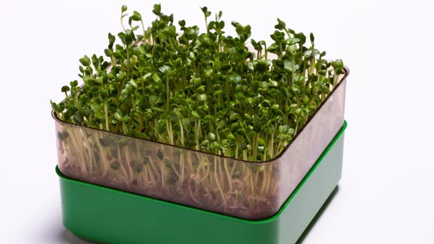 Проращиватель для семян