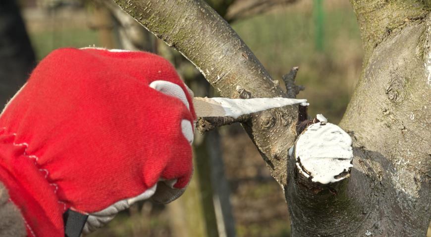 Осенняя обрезка яблони