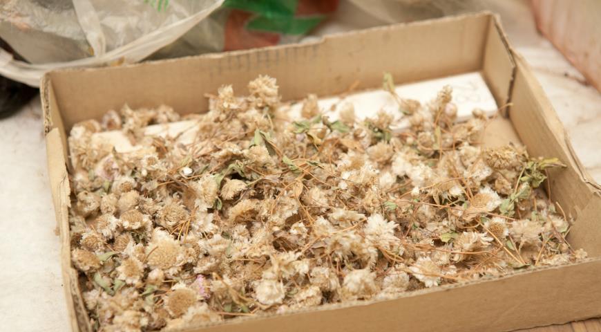 семена хранение