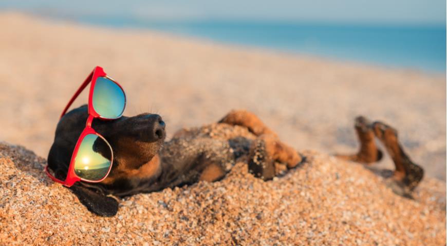 Как защитить домашних животных в жару на