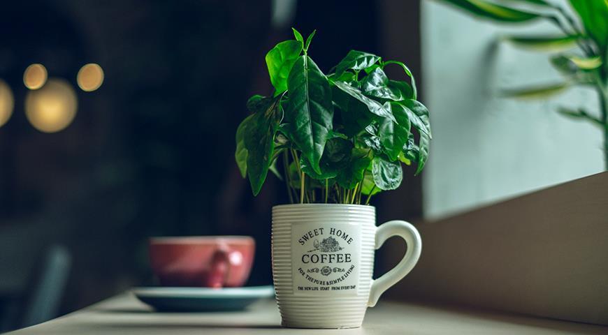 кофе в горшке