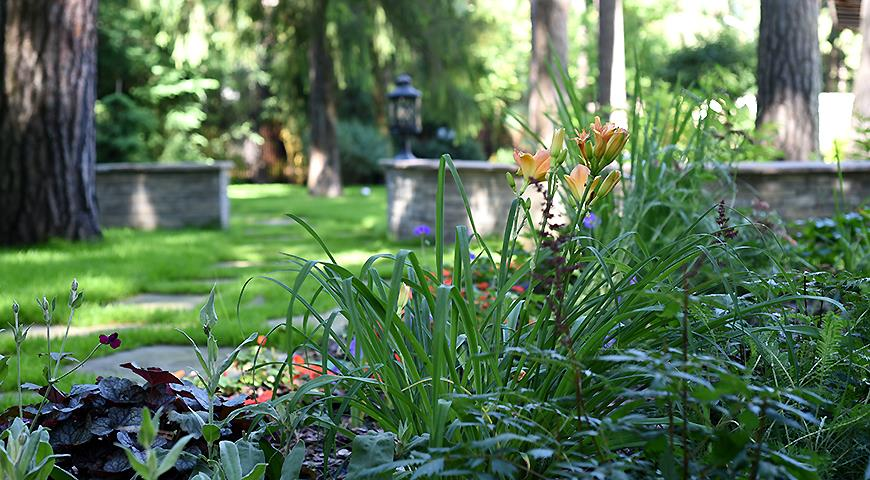 Сад под соснами Натальи Тарасовой
