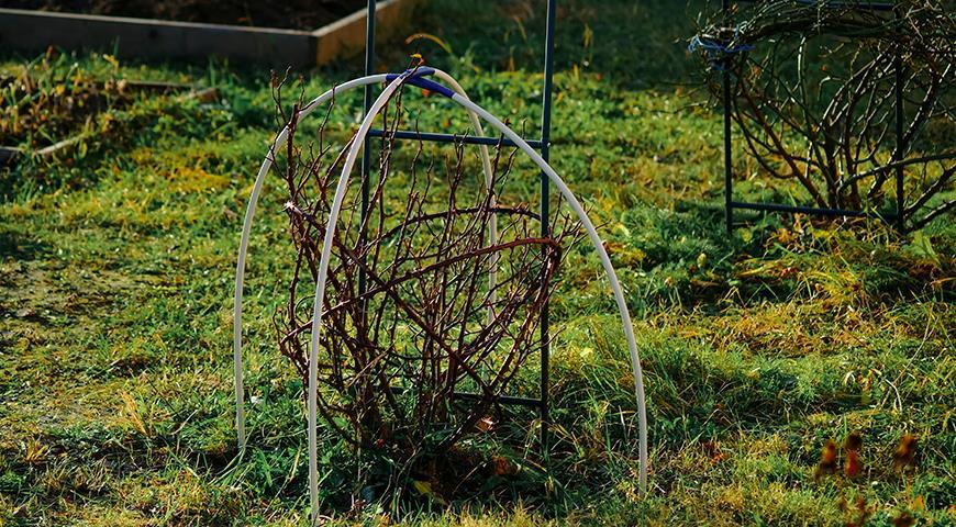 Лучшие способы укрытия малозимостойких культур: гортензий, роз, клематисов, рододендронов и винограда