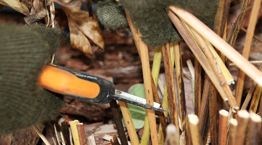 Осенняя обрезка цветника: какие растения надо обрезать в зиму?