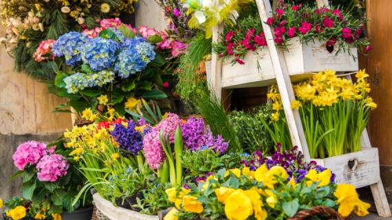 Когда сажать тюльпаны, нарциссы, лилии, крокусы и другие луковичные осенью