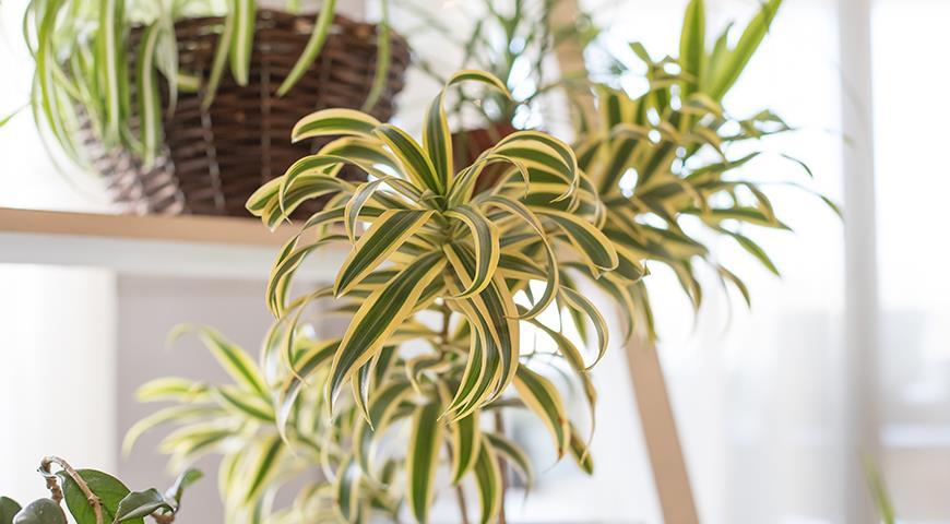Преимущества комнатных растений