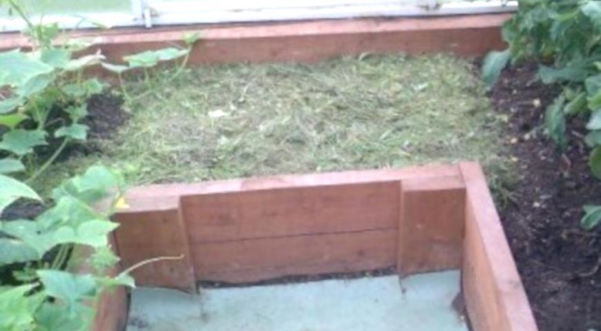 использование скошенной травы, теплица