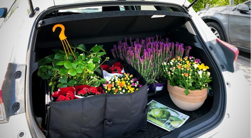 покупка растений, готовая рассада, перевозка растений