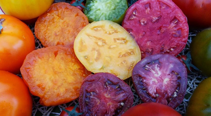 томаты серии Сахар