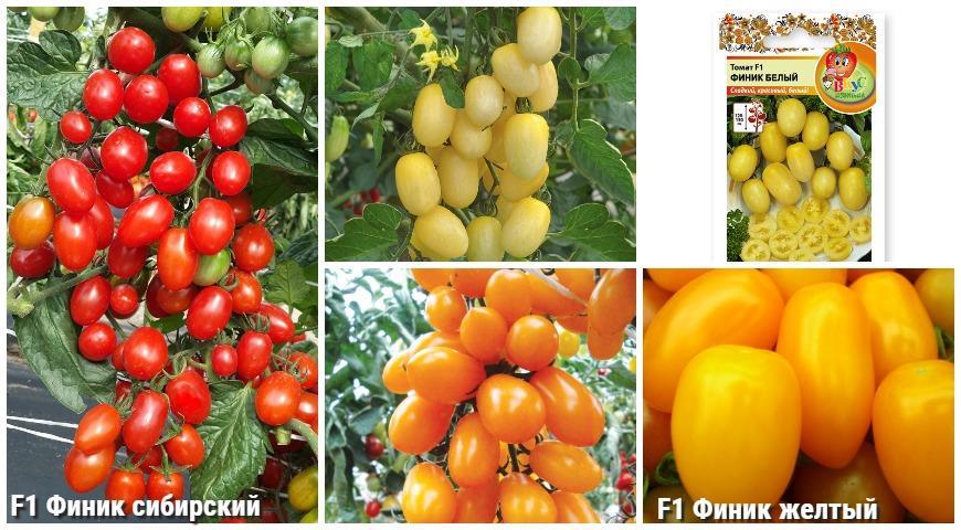 сладкие томаты Русский огород