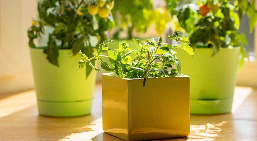 Овощи на балконе: подходящие сорта и секреты урожая томатов, баклажанов, перцев и т.д. в контейнерах