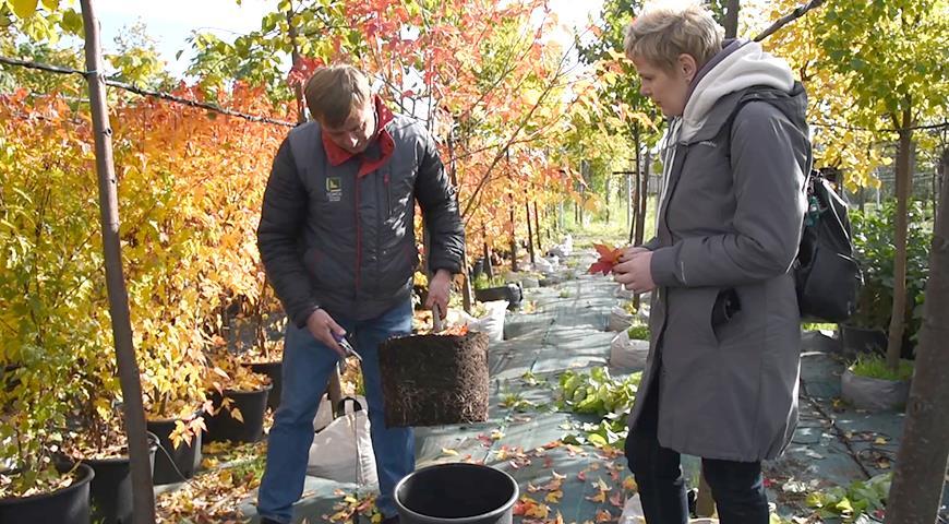 Осенние посадки деревьев и кустарников: что сажать, а что отправить в прикоп?